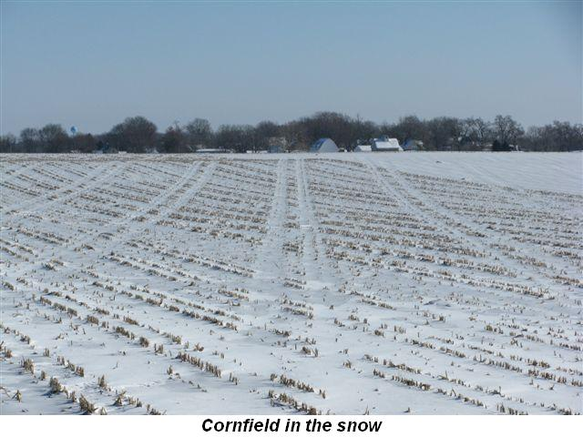 Blog 3 - Cornfield in snow