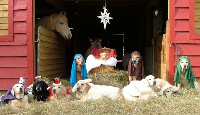 Dogs in manger