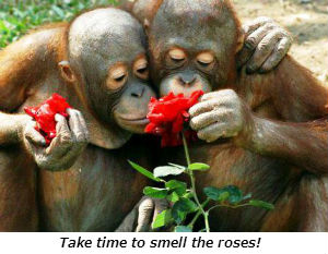 Stopping to smell the roses