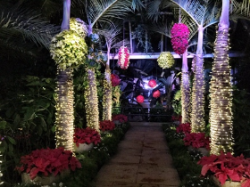 The Garden lit up for the holidays!