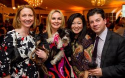 SSR Bark n Ball 2016 (160 of 180)