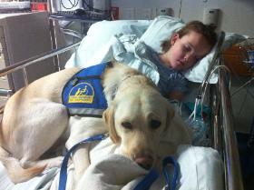 A Canine Companion Service Dog providing comfort