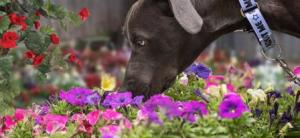 Petals for Pets