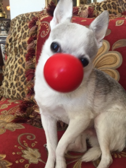 Even Rooney has his Red Nose On!