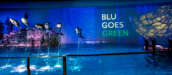White-sided dolphins catch some air time during aquatic show