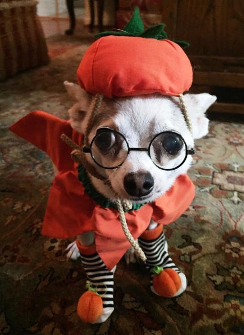 Rooney hopes everyone has a spooktacular Halloween!