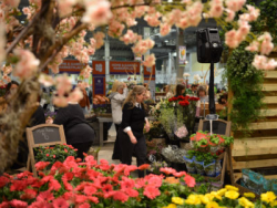 Flower Show 2016