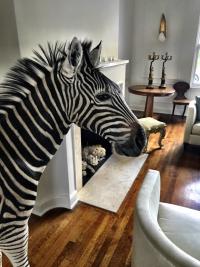 Leslie's guard zebra, Patricia