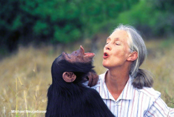 Jane Goodall will be keynote speaker at Field Museum Luncheon, April 3