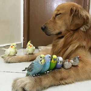Bob the Retriever and Friends