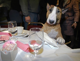 Nothing better than dining with Fido!