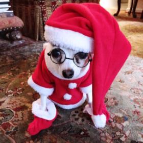 Santa Rooney