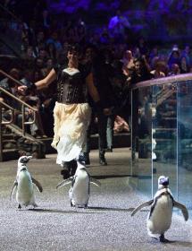 A parade of penguins!