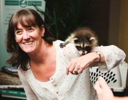 #Margaret Frisbie, FCR executive director, and her little raccoon friend