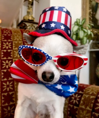 We hope your July 4th celebrations were happy and safe!