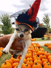 Rooney is feelin' a little witchy in the pumpkin patch!