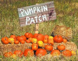 9.25.17-Pumpkin-Patches-1024x807