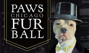 2020_PAWS_Chicago_Furball